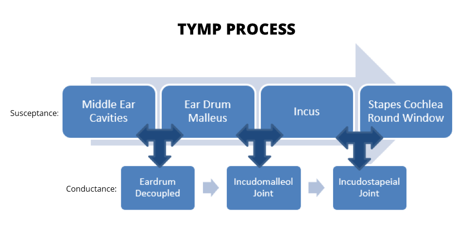 TYMP process infographic
